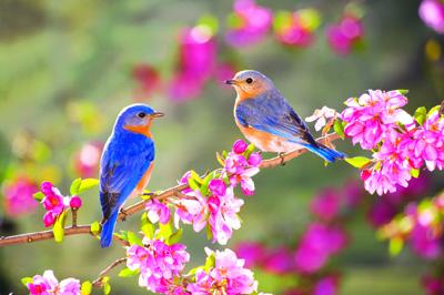 spring-birds1